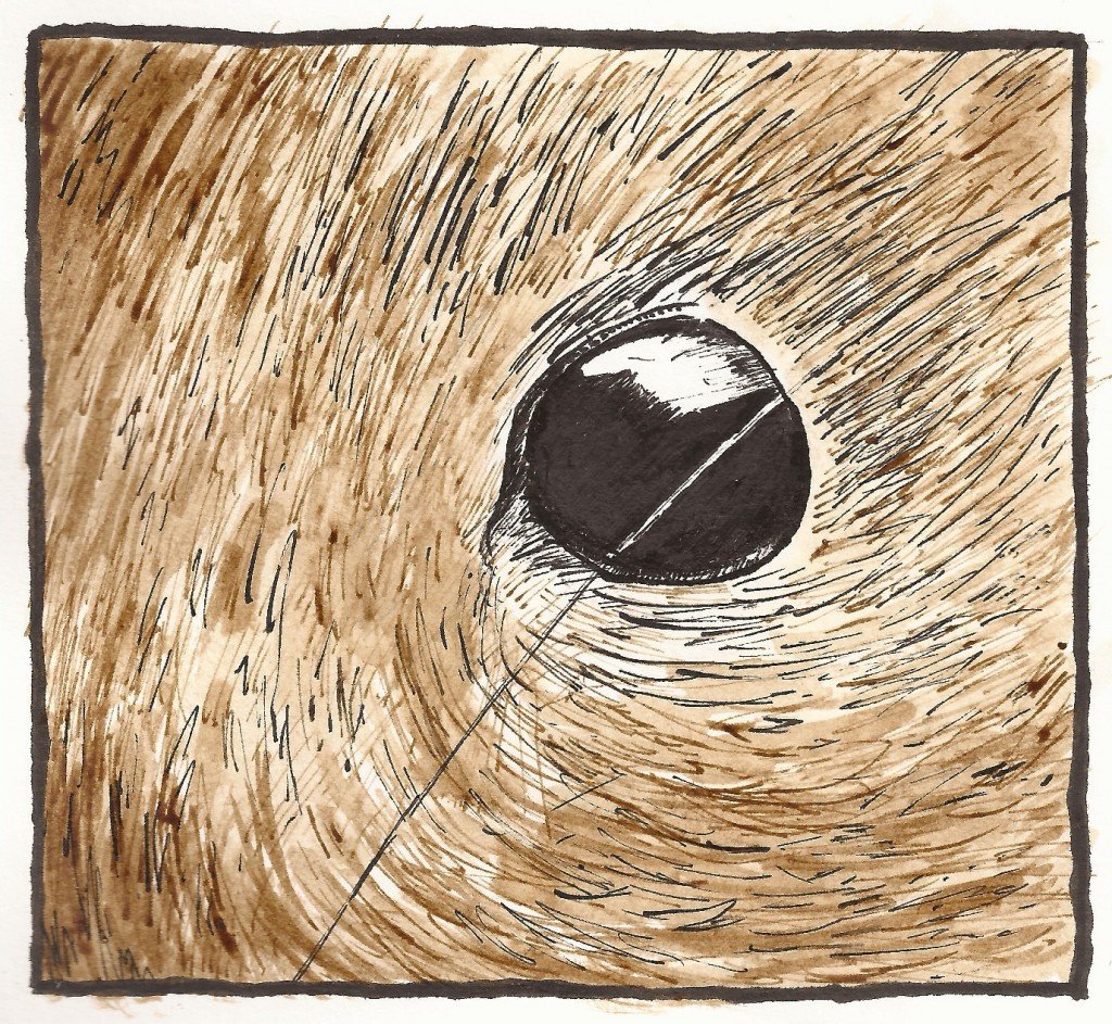 oeil de souris