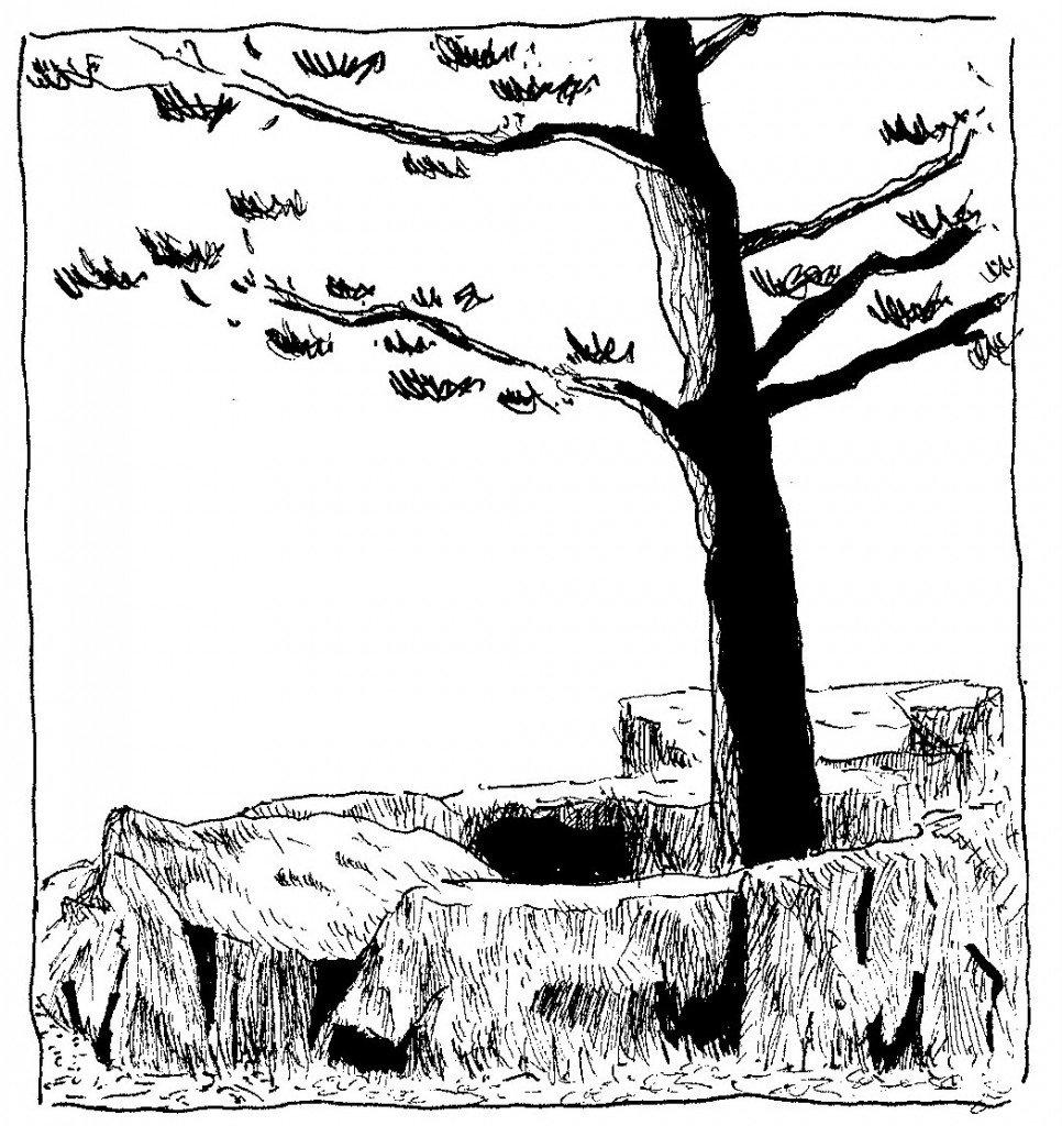 arbre.japonais