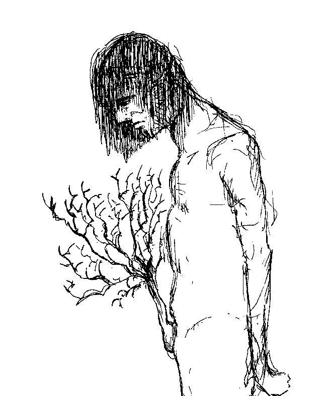 arbre sexe
