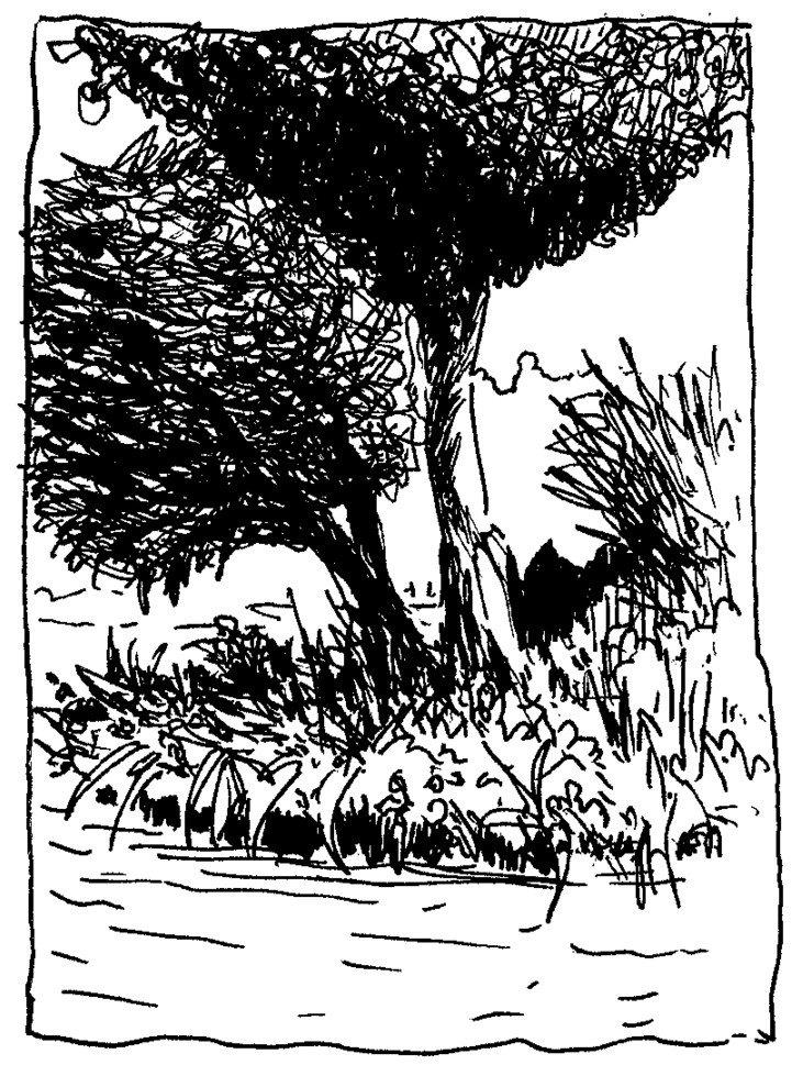 arbres erdre