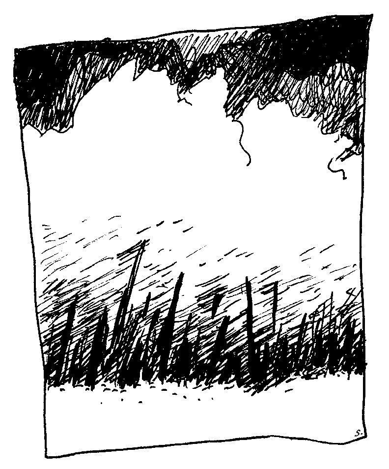 forêt rumeur