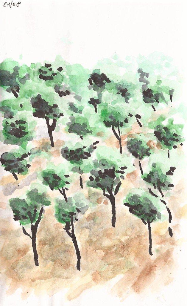 arbres au portugal