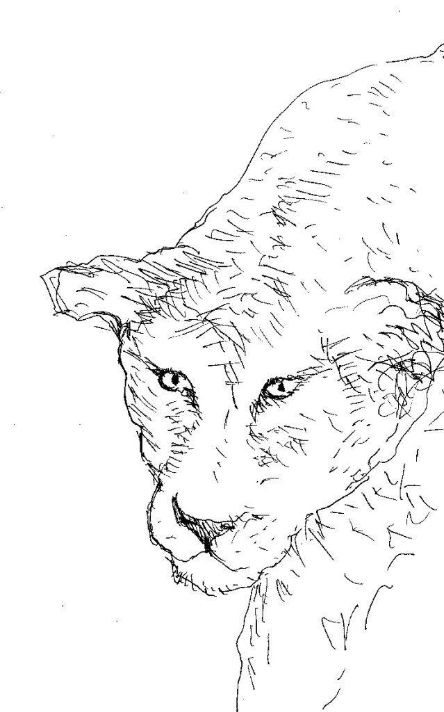 museum histoire naturelle lion