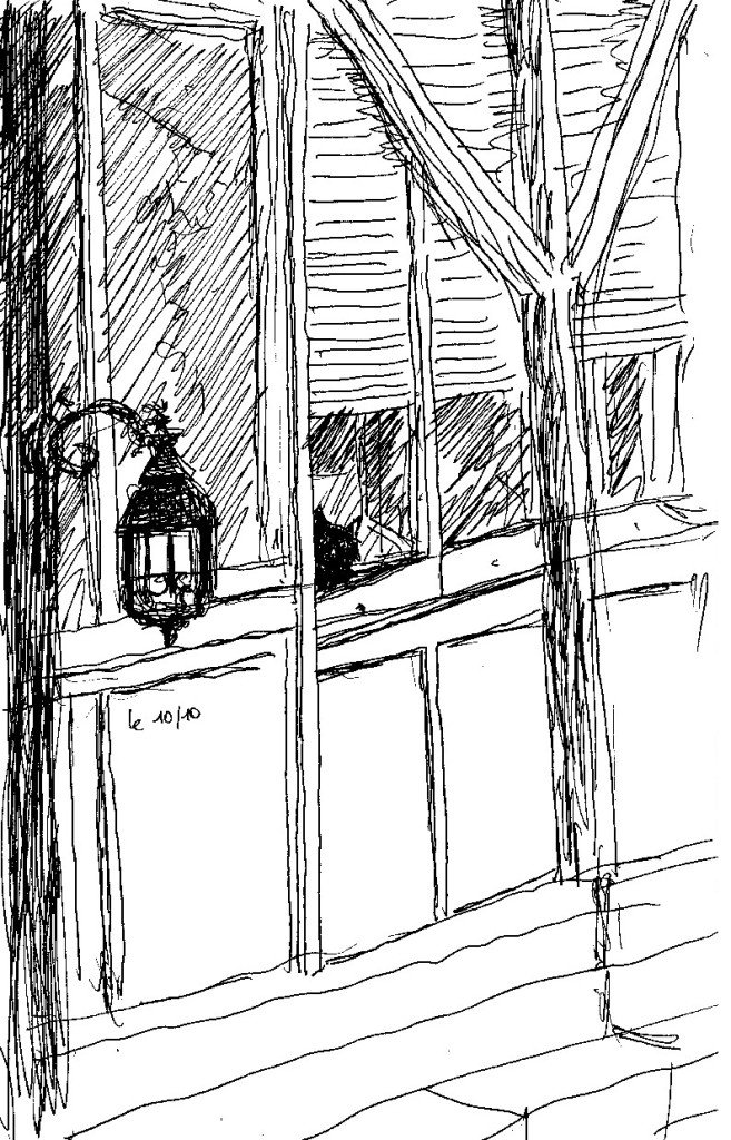 chat a sa fenêtre