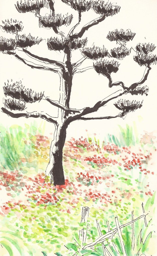 arbre japonais