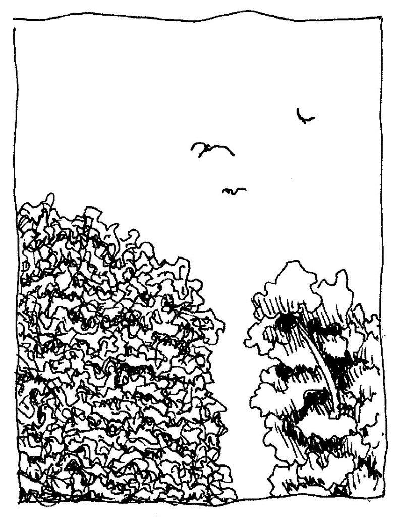ciel oiseaux