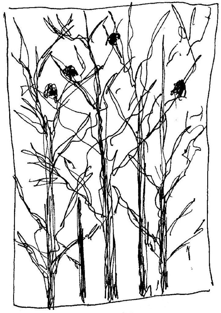 corneilles dans les arbres