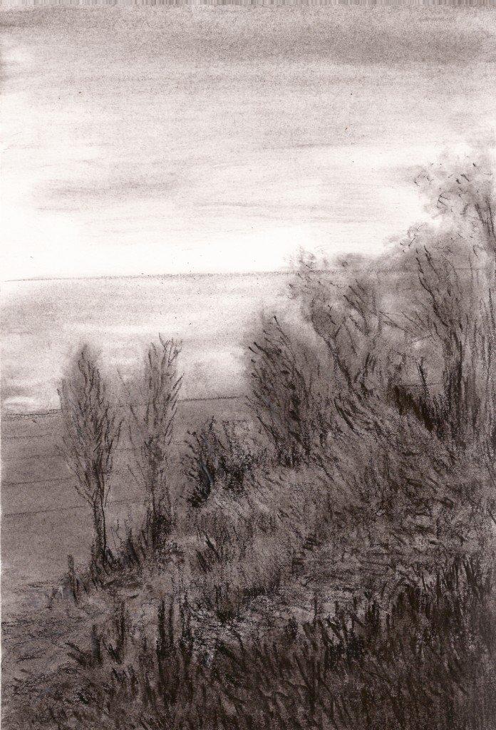arbres sur la plage
