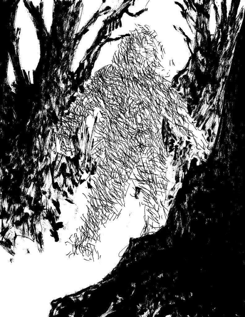 ombre dans la forêt
