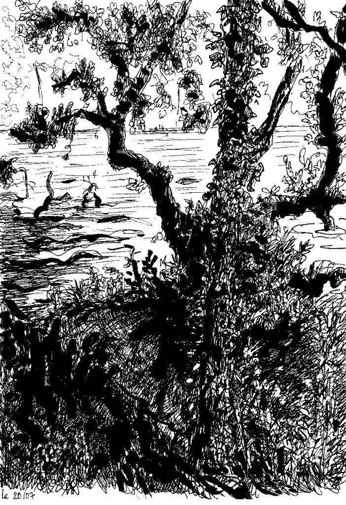 arbre erdre
