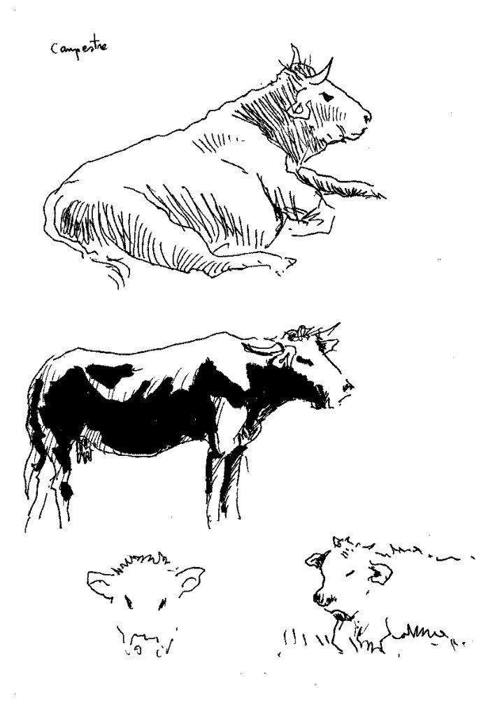 vaches dans les cevennes